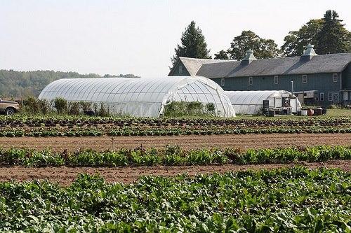 Circle Brook Farm